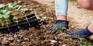 Sodininko kalendorius: ką sodinti gegužę ir kaip paruošti sėklas sodinimui