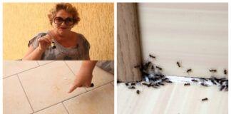 Sužinokite, kaip lengvai namuose atsikratyti skruzdėlių!