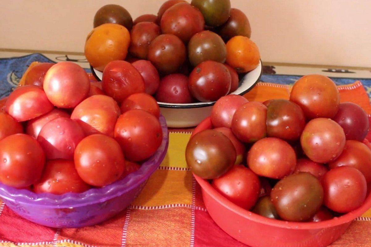 pomidorų sultys
