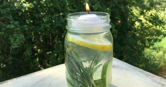 Metodas, kuris padės atsikratyti uodų. Mėgaukitės vasara be vabzdžių!