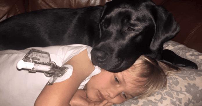 Kai diabetu sergančio berniuko cukraus kiekis nukrito iki pavojingos ribos, štai, ką padarė jo šuo