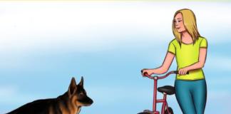 Ką daryti sutikus benamį šunį? Patarimai, kurie gali išgelbėti jūsų gyvybę