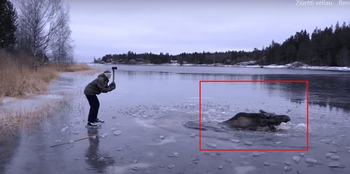 Žmonės pamatė, kad kažkas bando ištrūkti iš ežero ledo gniaužtų. Tai kas nutiko vėliau yra neįtikėtina!
