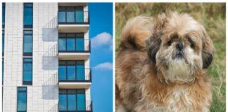 Šuo krito iš 9 aukšto balkono, o praeivis, nieko negalvojęs, jį išgelbėjo