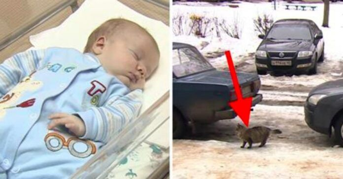 Motina paliko kūdikį sušalti. Bet pažiūrėkite, ką padarė ši katė!
