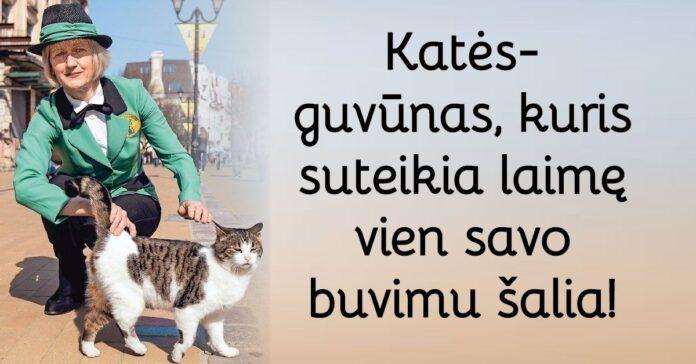 Pagalba katėms: išsamios Svetlanos Logunovos instrukcijos