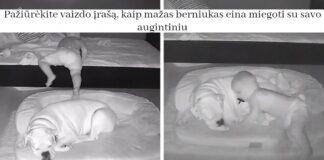 Pažiūrėkite vaizdo įrašą, kaip mažas berniukas eina miegoti su savo augintiniu