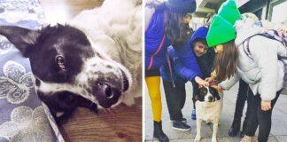Susipažinkite: benamis šuo, kuris padeda vaikams pereiti per pėsčiųjų perėją