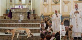 Kunigas gelbsti benamius šunis: atveda juos į bažnyčią