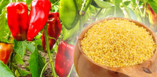 Sužinokite, kodėl naudinga daržoves tręšti soromis
