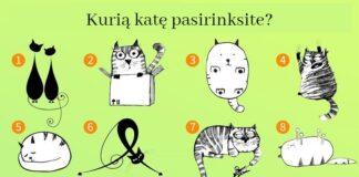 Testas: kokius užslėptus charakterio bruožus atskleidžia pasirinkta katė?