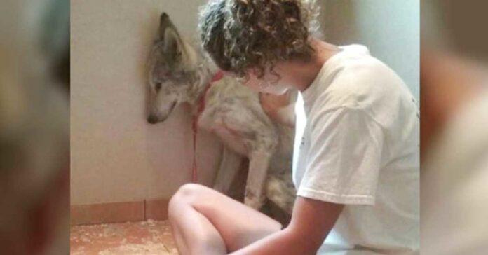 Šuns ir vilko mišrūnas visko bijojo, kol rado namus ir sužinojo, kas yra meilė