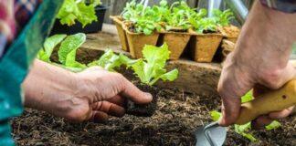 Gėlės ir daržovės, kurias dar galima sodinti rugpjūčio mėnesį