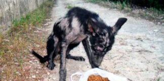 Šuo gyveno miške, nes žmonės jį išmetė... Pažiūrėkite, kaip jam sekasi