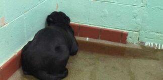 Šeimininkų paliktas šuo iš baimės gūžėsi kampe. Ši nuotrauka išgelbėjo jam gyvybę