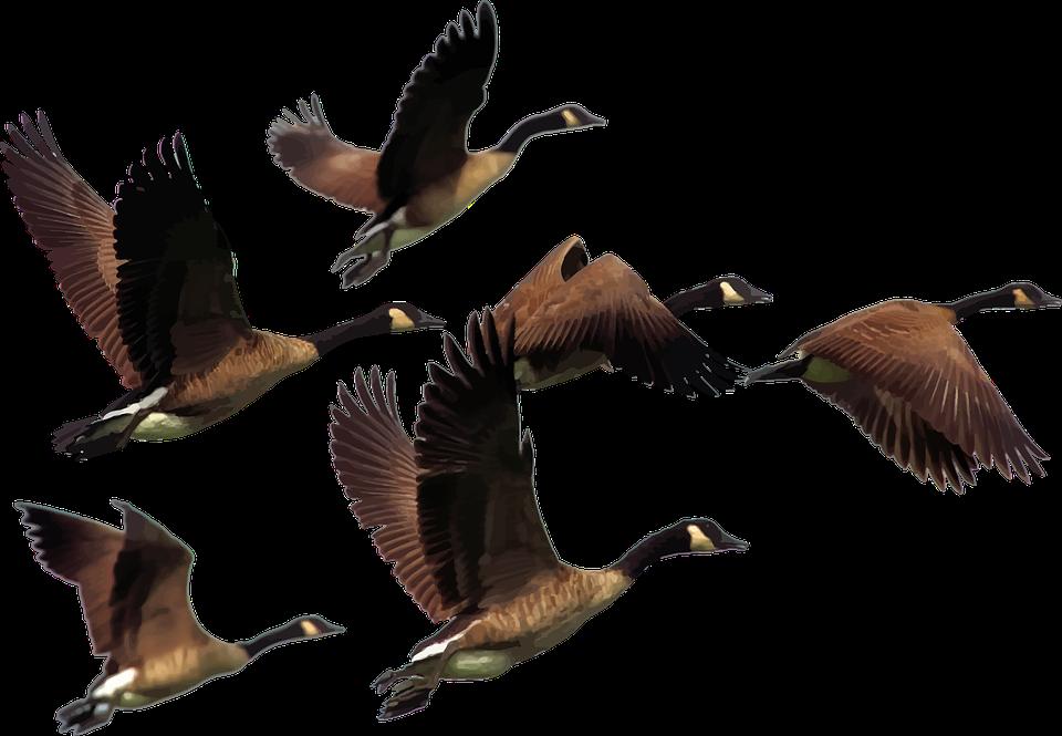 paukščių