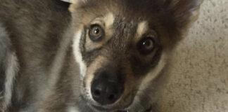Šeima nusivežė šunį į gyvūnų prieglaudą ir leido jam išsirinkti naują draugą