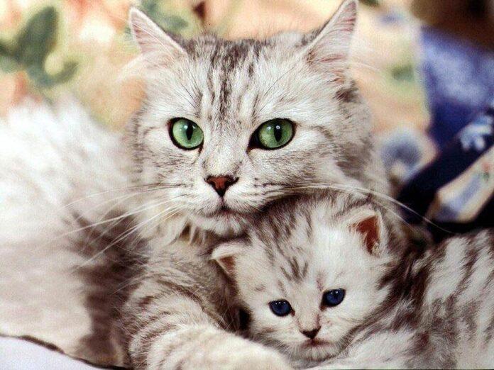 Astrologai teigia, kad katės spalva veikia namų energiją