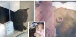 Tėvai išgirdo keistus katės skleidžiamus garsus ir nuėjo patikrinti, kaip laikosi kūdikis
