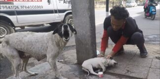 Šuo beviltiškai šaukėsi pagalbos savo sužeistam mažyliui
