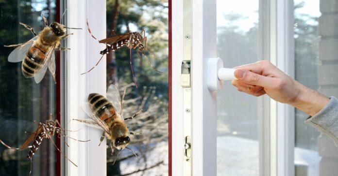 Močiutės būdas, kuris apsaugos nuo vabzdžių net su atidarytais langais!