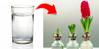 Stiklinės vandens užtenka užauginti net 13 skirtingų augalų