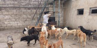 Vyras išgelbėjo jau 350 šunų! Radęs gatvėje jis juos slaugo ir aprūpina meile