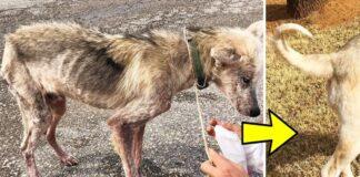 Gyvūnų mylėtojai išgelbėjo 2 metus prie grandinės prirakintą ir kankintą šunį