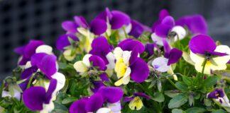 Geriausi 5 augalai, kurie privilios meilę į jūsų namus