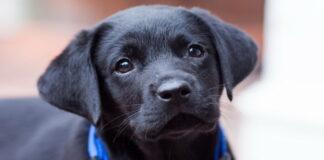 Kad surastų naujus namus, prieglaudoje šuniukas net išmoko šypsotis