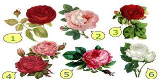 Testas: pasirinkite rožę ir ji atskleis, kokia meilė jums būdinga