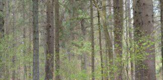 Lietuvos miškas