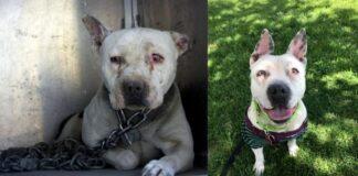 Šeimininkui patekus į kalėjimą šuo turėjo 2 metus jo laukti pririštas grandine