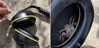 Vyras užsidėjo ausines, bet pajuto, jog kažkas kutena ausį...