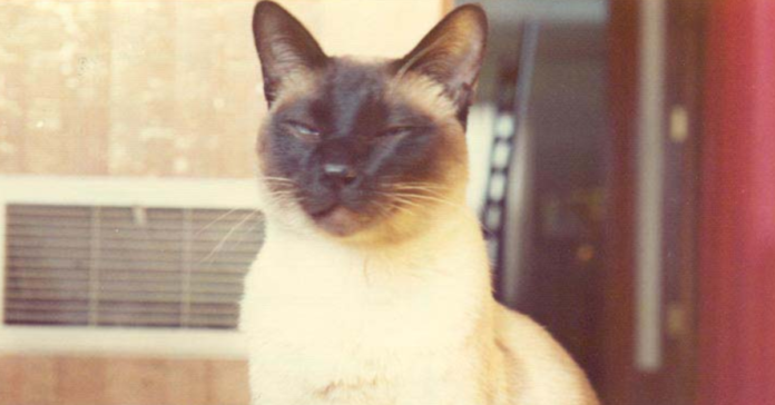 Sužinokite, kaip katė tapo mokslinio straipsnio apie fiziką bendraautore