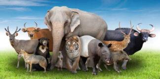 Pasirinkite 3 gyvūnus ir sužinokite, kaip jus mato kiti ir ką manote apie save