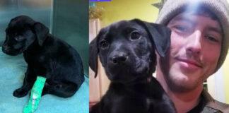 Niekas nenorėjo kurčio šuns, tačiau apie jį sužinojo kurčias vaikinas ir jie tapo viena šeima