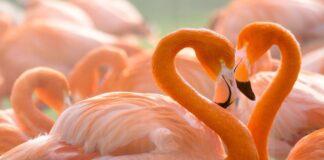 Kurios Zodiako ženklo atstovės spalio 20-31 dienomis sutiks tikrąją meilę?