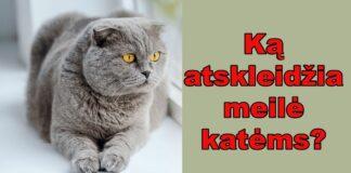 Ką apie mus sako mūsų meilė katėms? Sužinokite!