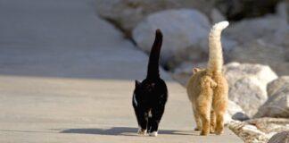 Liaudies prietarai: ką reiškia, jei katė išėjo iš namų?