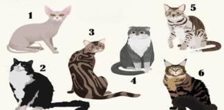 Pasirinkite katę ir sužinokite keletą savo asmenybės bruožų