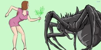 Kodėl namuose būna daug vorų? Sužinokite visą tiesą