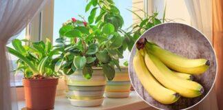 Ką daryti, kad kambariniai augalai augtų nepaprastu greičiu?