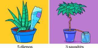 Išradingi būdai, kaip palaistyti augalus, kai namuose nieko nėra