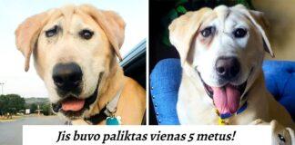 Du kartus dėl išvaizdos žmonių paliktas šuo pagaliau surado jį mylintį šeimininką