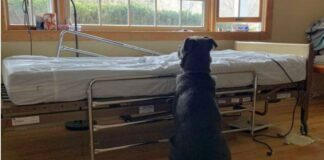 Širdį verianti istorija: ištikimas šuo vis dar lanko palatą, nors jo šeimininko nebėra