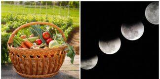 Sėjos Mėnulio kalendorius 2021 metams: kada ir ką sėti?