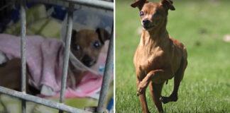 Šuo buvo uždarytas 12 metų - pažiūrėkite, kaip jis reaguoja, kai pirmą kartą pajaučia žolę po letenomis