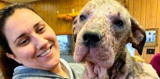 Moteris priglaudė sergantį šunį ir jį išgydė. Dabar jį sunku atpažinti!