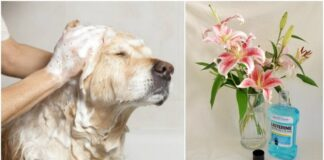 Stebinantys, bet naudingi burnos skalavimo skysčio panaudojimo būdai namuose